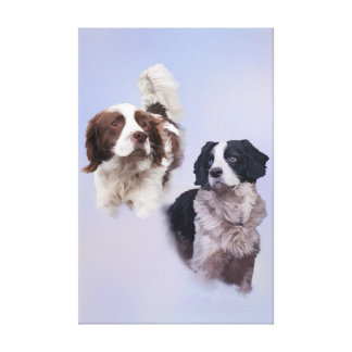 Springer spaniels gallery wrapped canvas