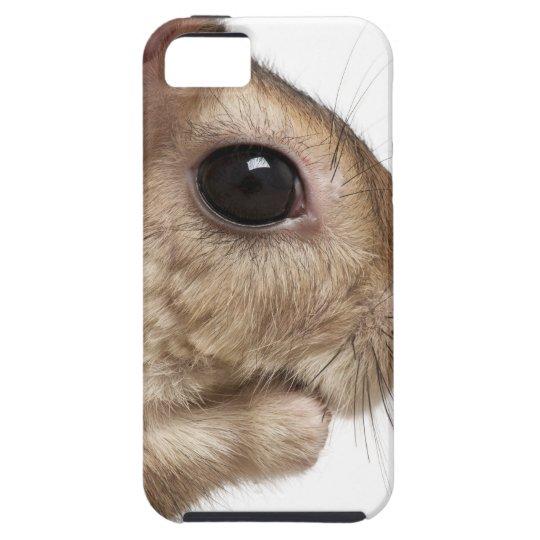 Springhare - Pedetes capensis - close-up iPhone SE/5/5s Case