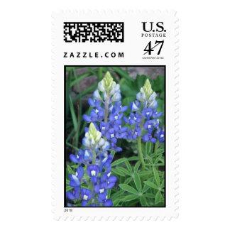 springpics 022 postage