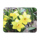 Spring's First Daffodils Vinyl Magnet