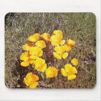 Spring's First Kiss ~ California Poppies Mouse Pad