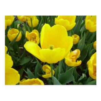 Spring's Sunshine Yellow Tulips CricketDiane Postcard