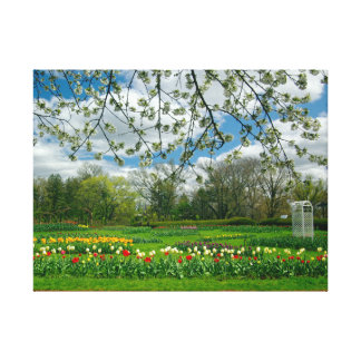 Springtime beauty at Elizabeth Park Gallery Wrap Canvas