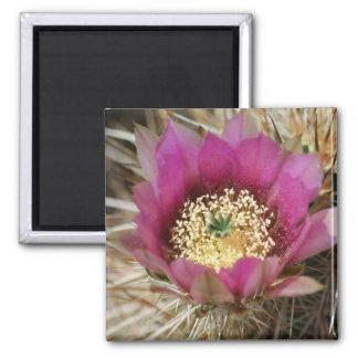 Springtime Cactus Flower series 1 Refrigerator Magnet