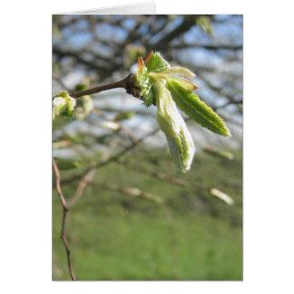 Springtime! Card