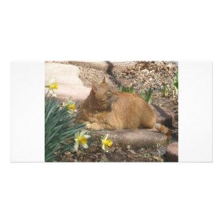 Springtime cat card
