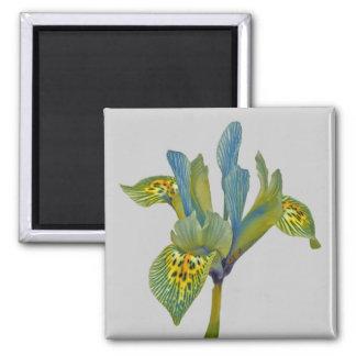 Springtime flower magnet