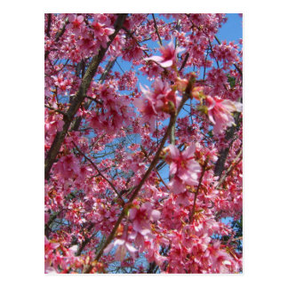 Springtime Flowering Trees CricketDiane Collection Postcard