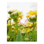 Springtime Flowers in Bloom Post Cards