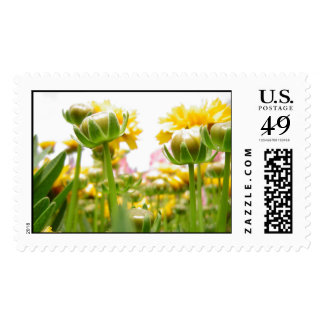 Springtime Flowers in Bloom Stamps