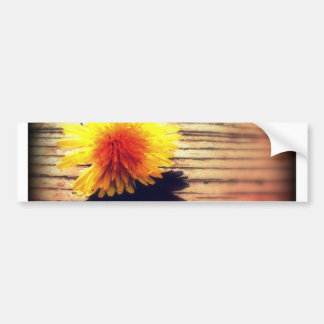 Springtime Golden Yellow Dandelion Wishes Car Bumper Sticker