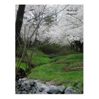 Springtime in Bethesda, Maryland Postcard
