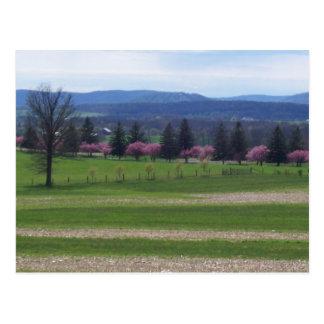 Springtime In Gettysburg Postcard
