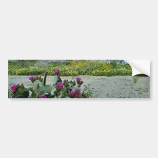 Springtime in the Sonoran Desert Pink flowers Bumper Sticker