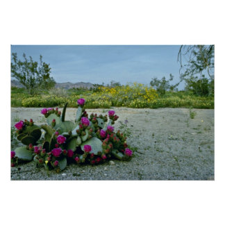 Springtime in the Sonoran Desert Pink flowers Poster