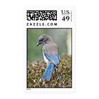 Springtime Jay Stamp