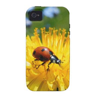 Springtime Ladybird on Dandelion iPhone 4 Cases