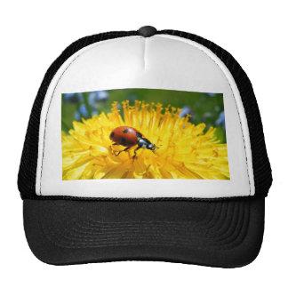 Springtime Ladybird on Dandelion Cap