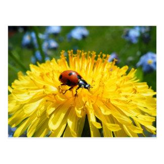 Springtime Ladybird on Dandelion Postcard