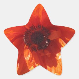 Springtime Orange Poppy Star Sticker