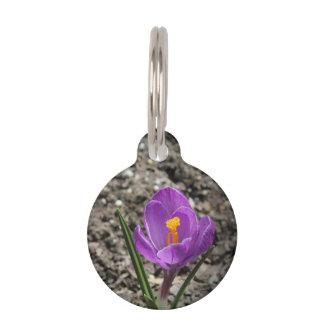 Springtime Purple and Yellow Crocus Flower Photo Pet Name Tag