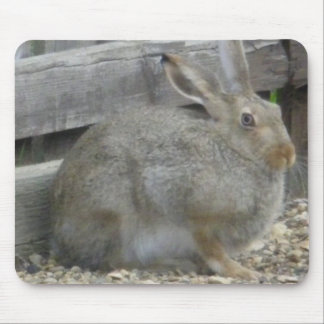 Springtime Rabbit Mouse Pad