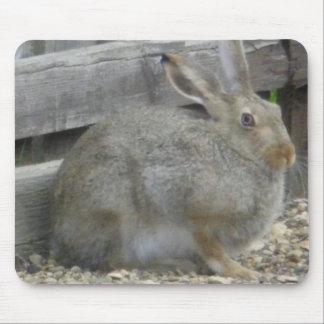 Springtime Rabbit Mouse Pads