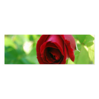 Springtime Rose [Skinny] Double-Sided Mini Business Cards (Pack Of 20)