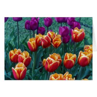 Springtime Tulips Greeting Cards