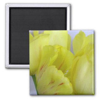 Springtime Tulips 2 Inch Square Magnet
