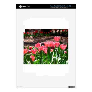 Springtime Tulips iPad 3 Skins
