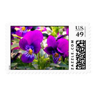 Springtime Violas Postage Stamps