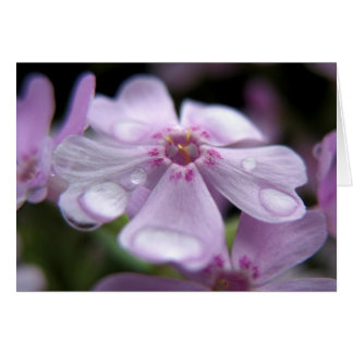 Springtime Waterdrops Card