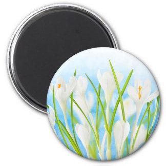 Springtime (white crocuses) magnet