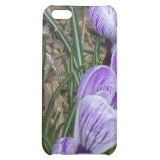 Springtime's Season Blooms Purple Crocuses Cover For iPhone 5C
