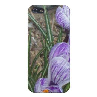 Springtime's Season Blooms Purple Crocuses Covers For iPhone 5