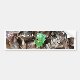 Sprout Amoungst Dead Leaves Bumper Stickers