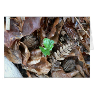 Sprout Amoungst Dead Leaves Greeting Card