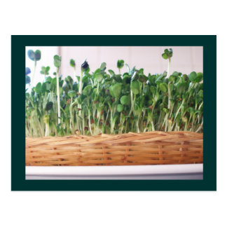 Sprout Forest Postcard
