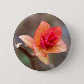 sprout in spring pinback button