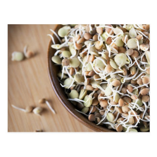 Sprouted Lentils Postcard