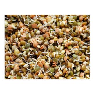 Sprouting Lentils Mix Postcard