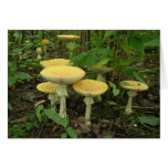 Sprouting Mushrooms Greeting Card