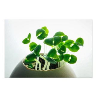 Sprouting Photo Print