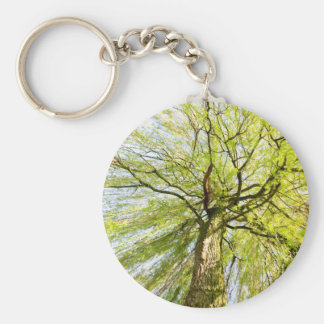 Sprouting willow tree in spring season basic round button keychain