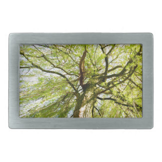 Sprouting willow tree in spring season belt buckle