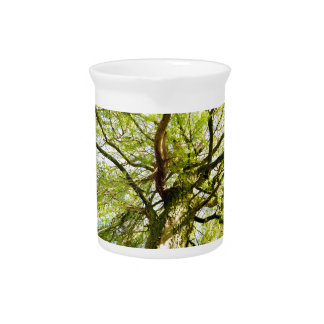 Sprouting willow tree in spring season drink pitcher