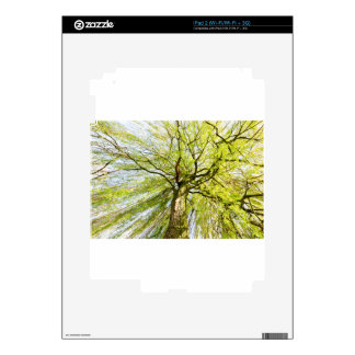Sprouting willow tree in spring season iPad 2 skin