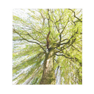 Sprouting willow tree in spring season note pad