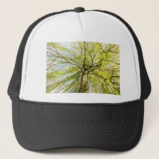 Sprouting willow tree in spring season trucker hat